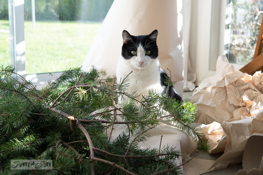 tuxedo cat in evergreens / outdoor shopping for Christmas / Funky Junk Interiors