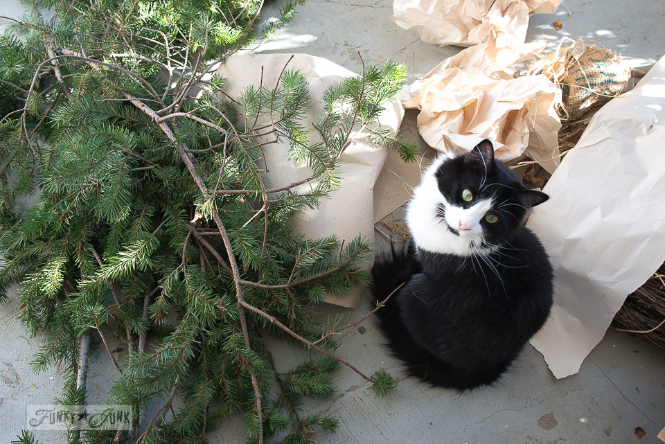 Evergreen branches with tuxedo cat / How I shop outdoors for Christmas decor / outdoor shopping tips via FunkyJunkInteriors.net