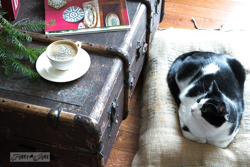 A tuxedo cat beside an old trunk with a frothy coffee  / FunkyJunkInteriors.net