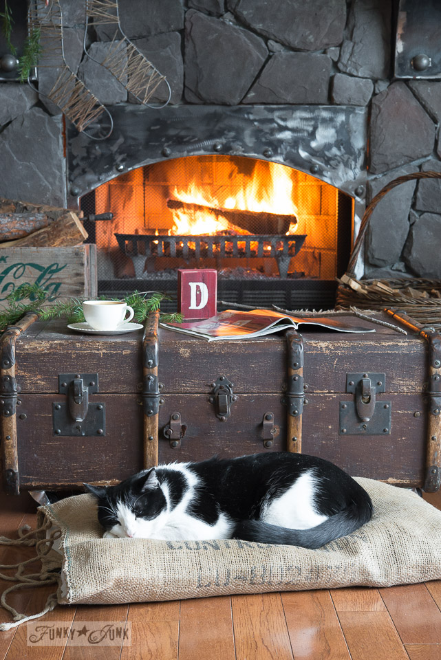 Sleeping cat on a trunk in front of a cozy fire - part of Valuable Cat Tips You May Not Know