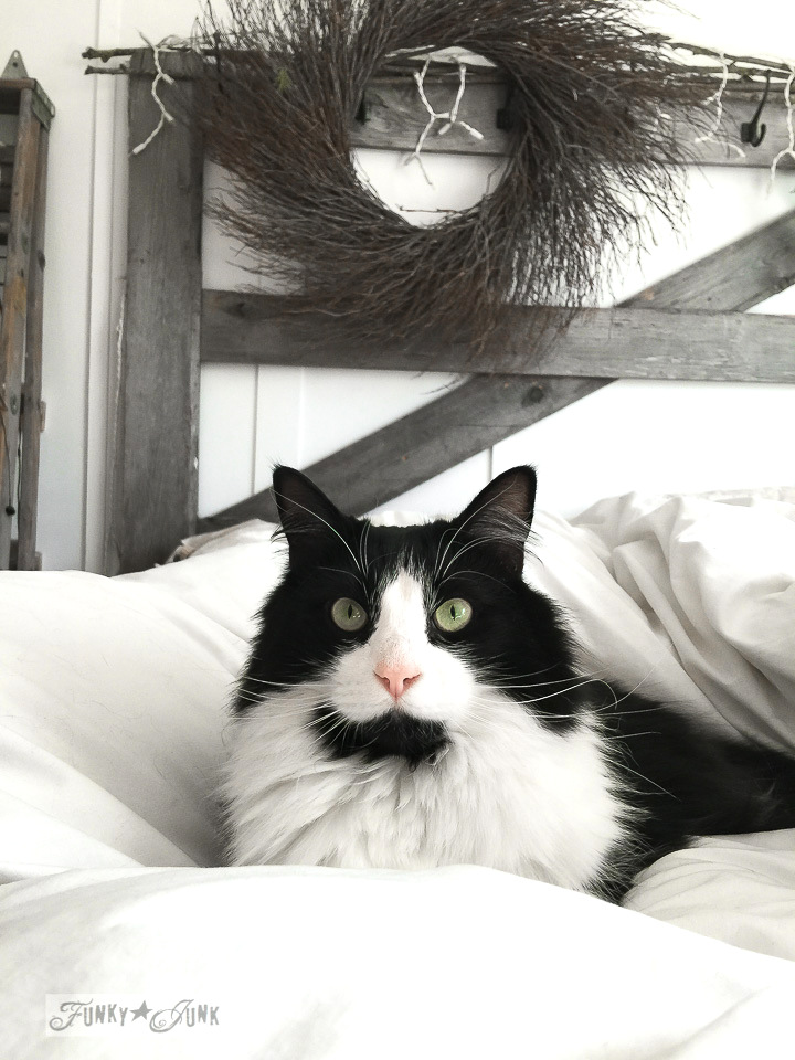 Tuxedo black and white cat Skye with a rustic gate headboard and twig wreath / FunkyJunkInteriors.net