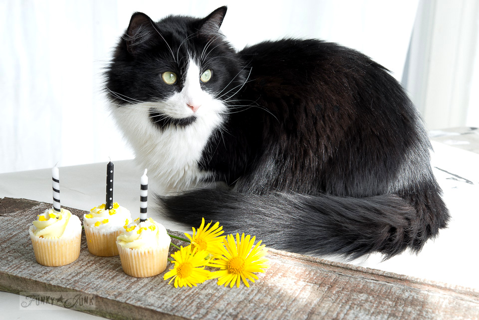 Tuxedo cat with yellow cupcakes on a reclaimed wood plank / FunkyJunkInteriors.net