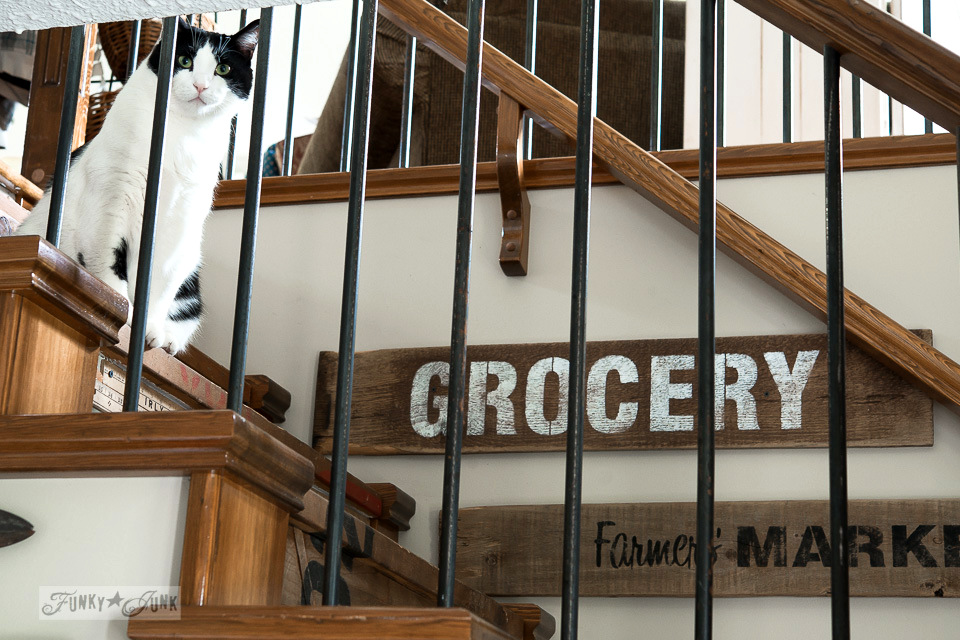 tuxedo cat with old signs / Funky Junk's 2015 Summer Home Junk Tour / FunkyJunkInteriors.net