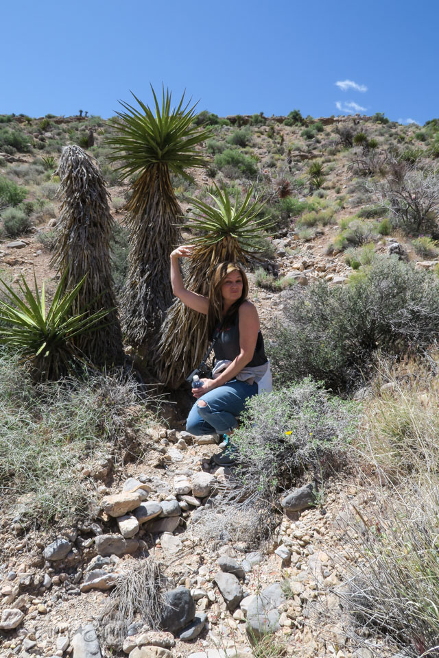 Desert vegetation / Visiting the stunning Red Rock Canyon while in Vegas / FunkyJunkInteriors.net