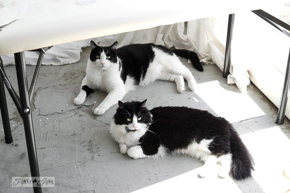 Tuxedo cats / funkyjunkinteriors.net
