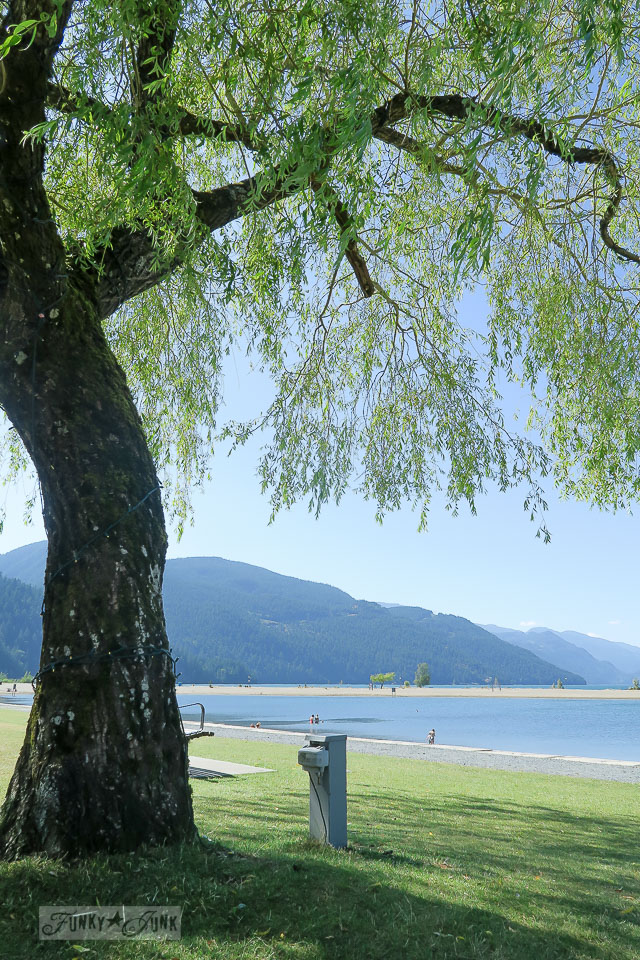 Weeping Willows on the beach / Harrison Hot Springs, BC / FunkyJunkInteriors.net