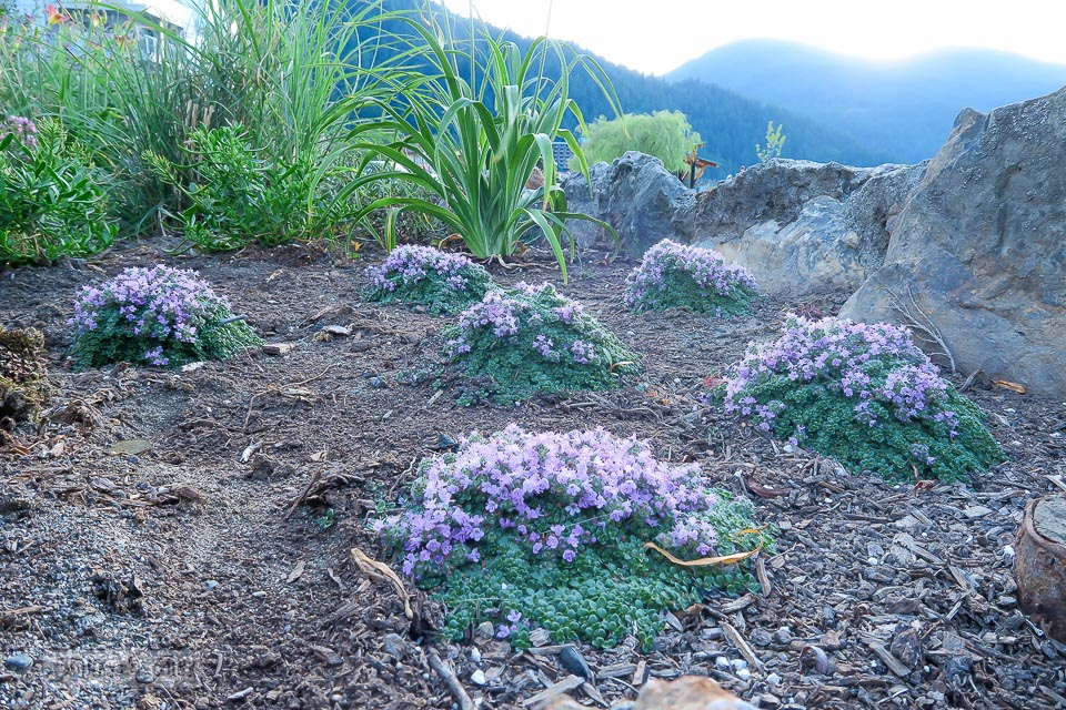 Flowerbeds along the beach walk / Harrison Hot Springs, BC / FunkyJunkInteriors.net