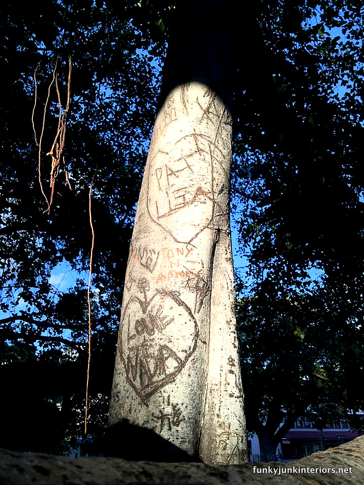 Carvings in the banyan tree in Lahaina, Maui / funkyjunkinteriors.net
