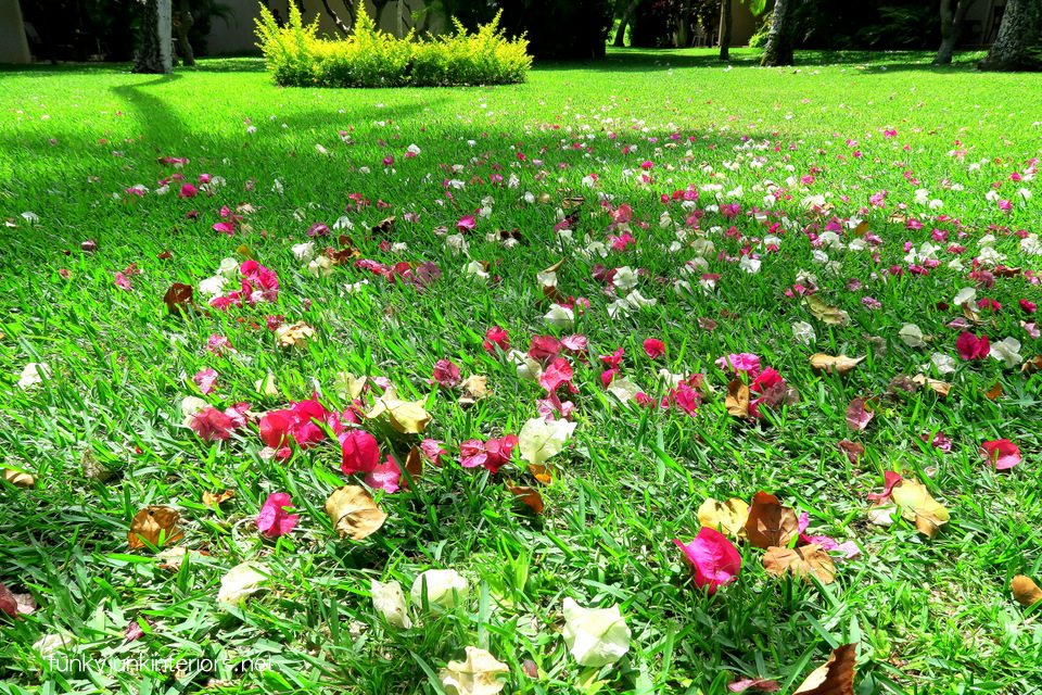 flower petals on the lawn / Our maui backyard / funkyjunkinteriors.net