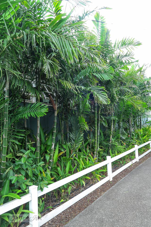 A row of palm trees in Makawao, Maui / www.funkyjunkinteriors.net