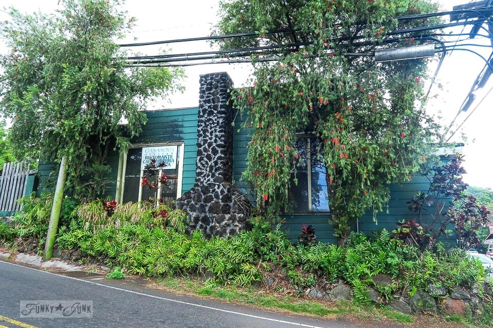 Tropical plants in Makawao, Maui / www.funkyjunkinteriors.net