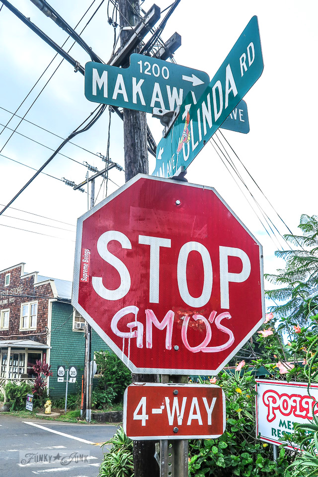 Stop sign with GMO message in Makawao, Maui / funkyjunkinteriors.net