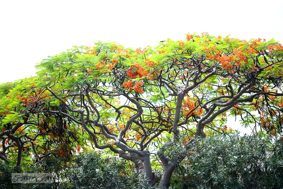 Tropical trees and flowers in Maui / funkyjunkinteriors.net