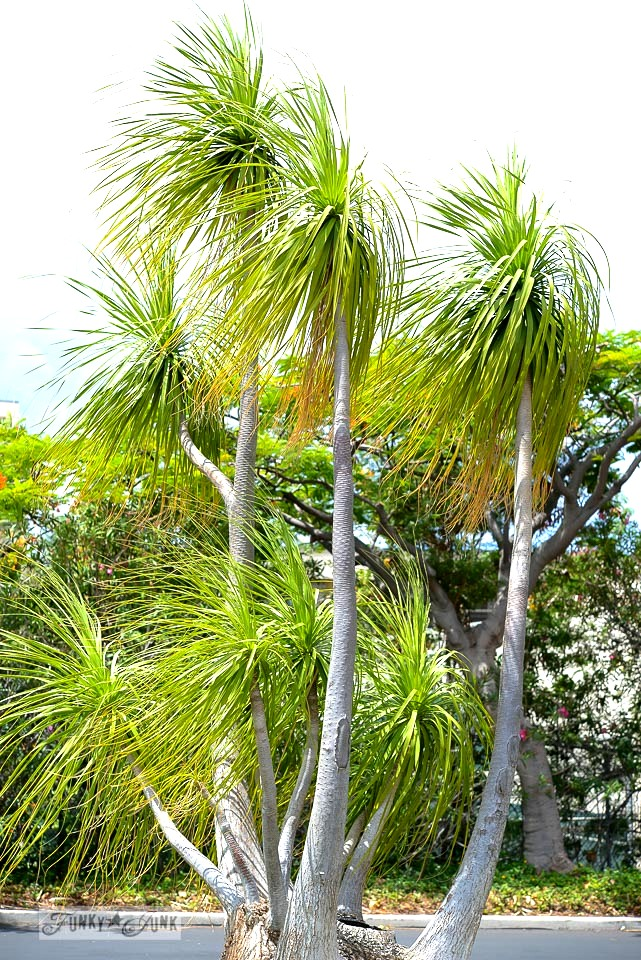 Maui palm trees / funkyjunkinteriors.net
