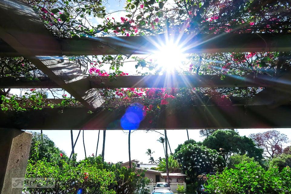 Sunburst through a Maui tropical arbour at Kihei Akahi / funkyjunkinteriors.net