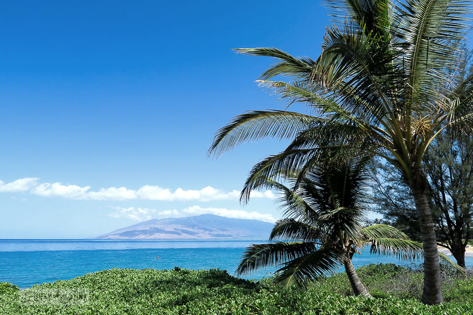 Tropical growth at the beach at Kamaole Beach Park 2 in Kihei, Mauii / funkyjunkinteriors.net