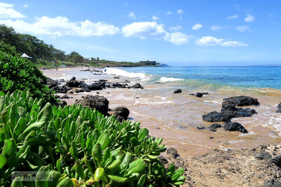 Gorgeous lava and plant life along Kamaole Beach 1 in Kihei, Maui | funkyjunkinteriors.net