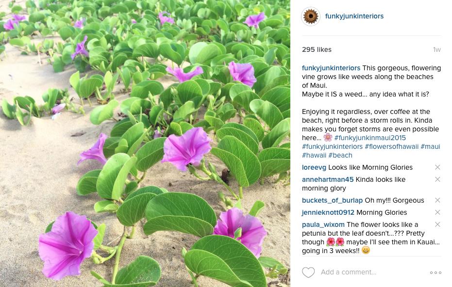Maui beach flowers in a vine