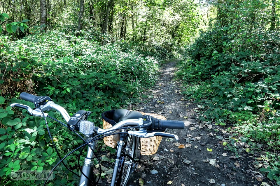 Trail bike ride through Great Blue Heron Natural Reserve / funkyjunkinteriors.net