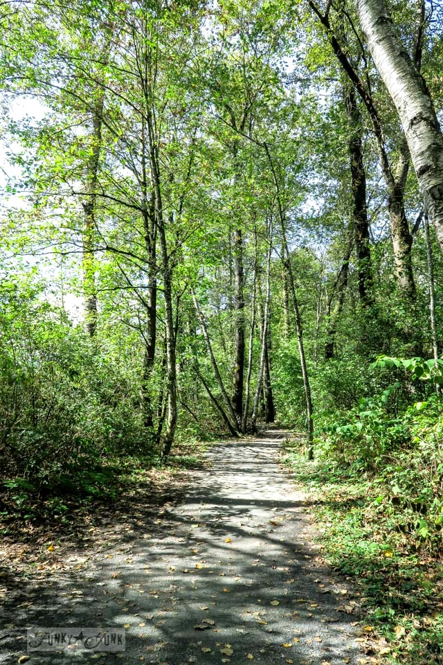 Forest bike trails through Great Blue Heron Natural Reserve / funkyjunkinteriors.net