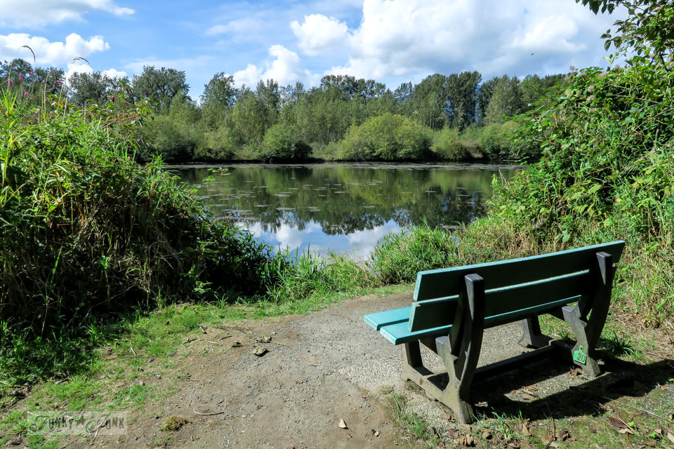 Bench by the water at Great Blue Heron Natural Reserve / funkyjunkinteriors.net