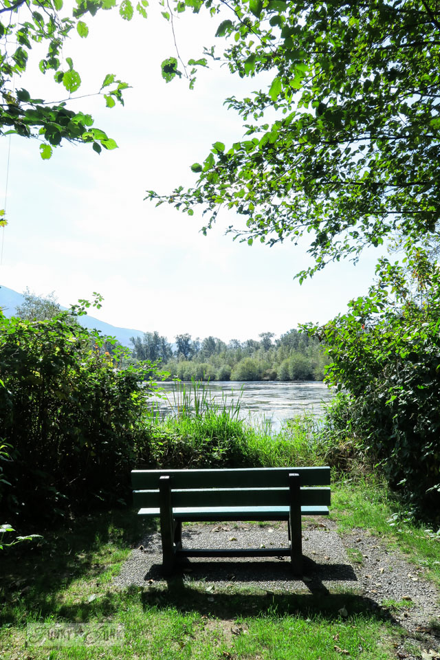 The perfect bench in front of a lake at Great Blue Heron Natural Reserve / funkyjunkinteriors.net