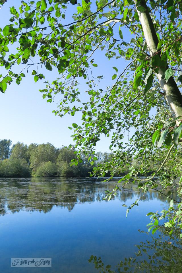 Blue heron reserve park / funkyjunkinteriors.net