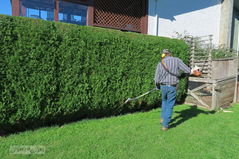 Walter pruning evergreen trees / funkyjunkinteriors.net