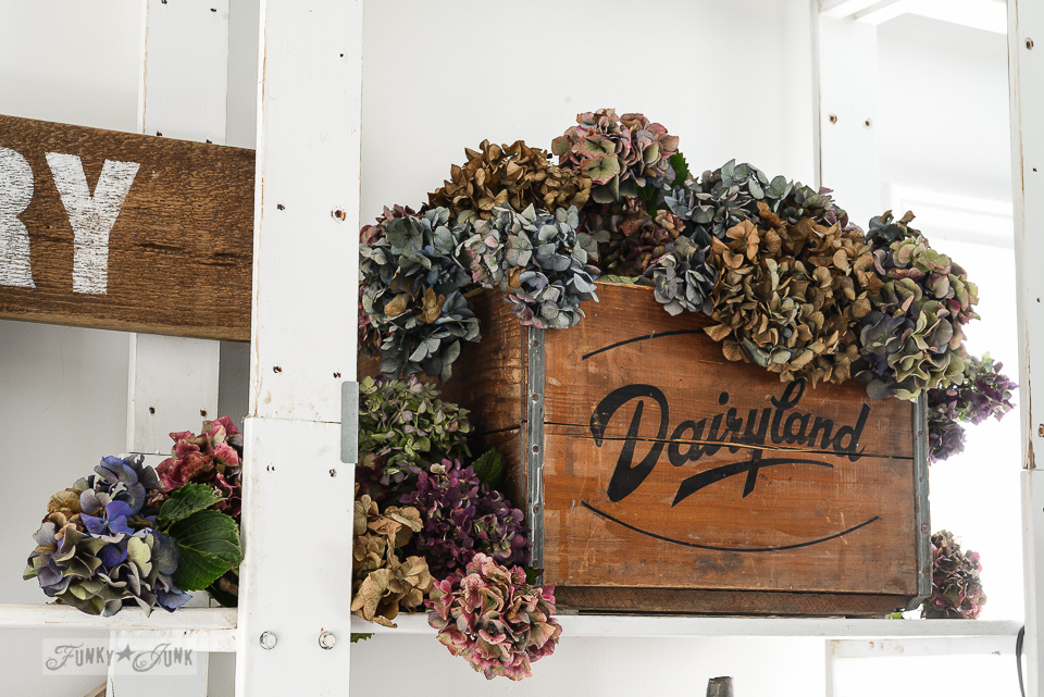 Dried fall hydrangeas arranged in a Dairyland antique crate in a blog office / funkyjunkinteriors.net