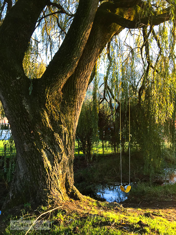 A swing hung from a willow tree during golden hour / funkyjunkinteriors.net