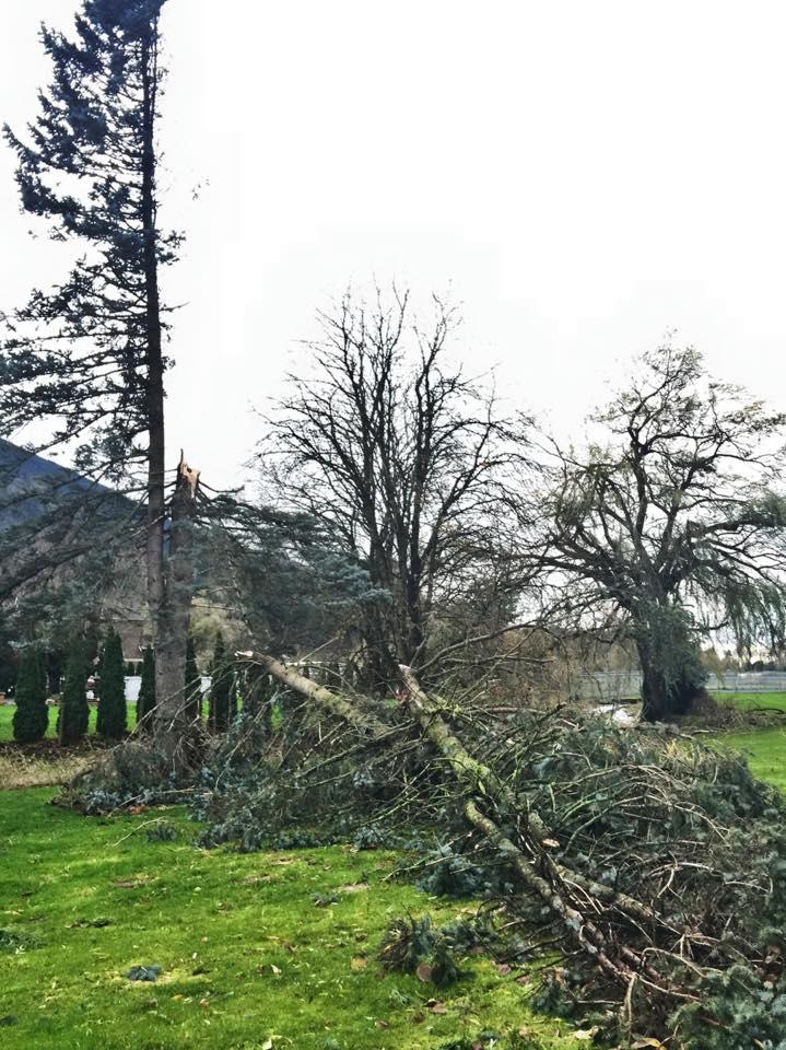 wind storm fallen trees