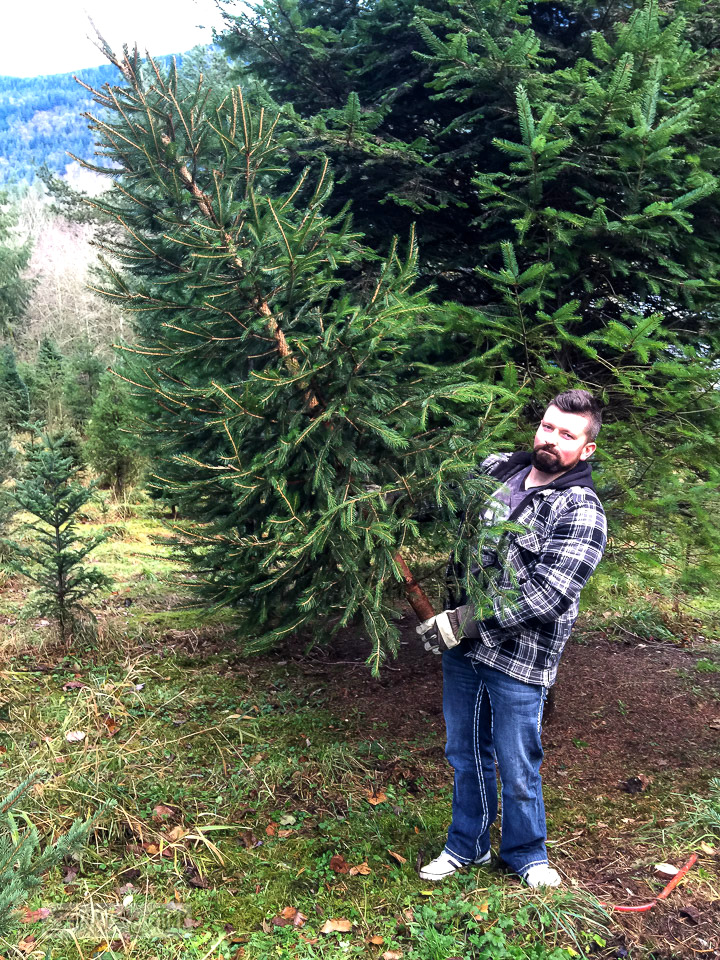 Visiting the Christmas tree farm / funkyjunkinteriors.net