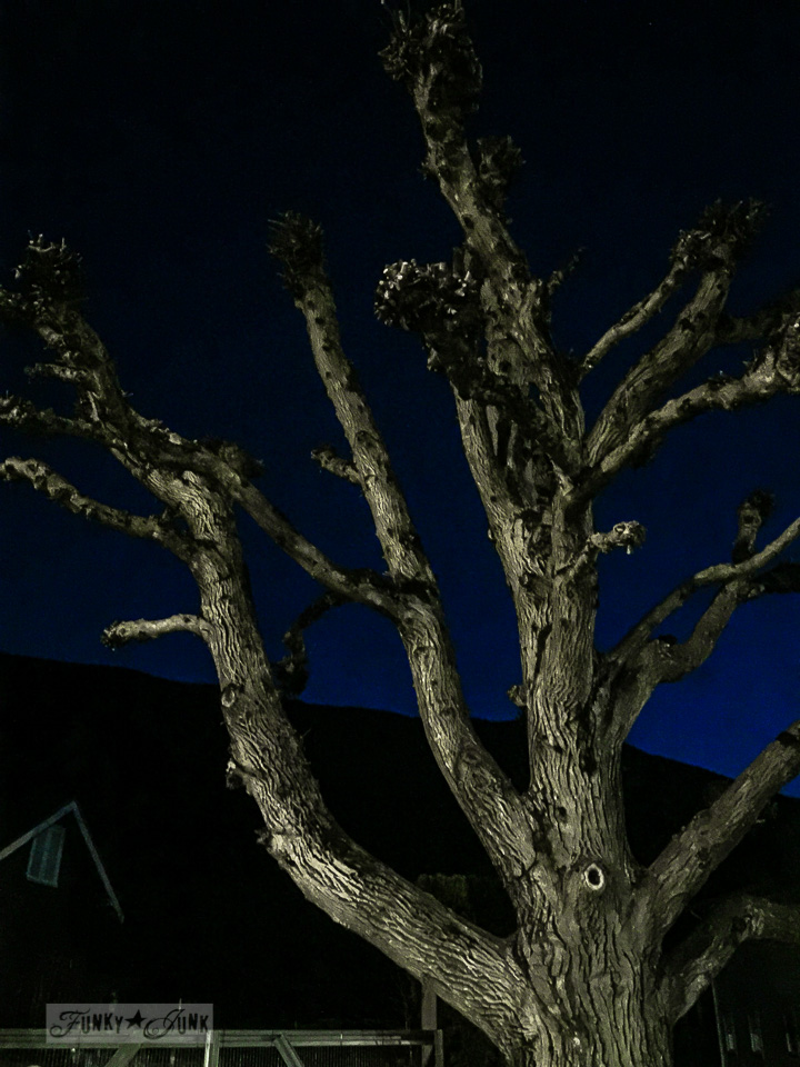 lamp post illuminated trees at night / part of Just call me the night rider - on working out. Or lack thereof... / funkyjunkinteriors.net