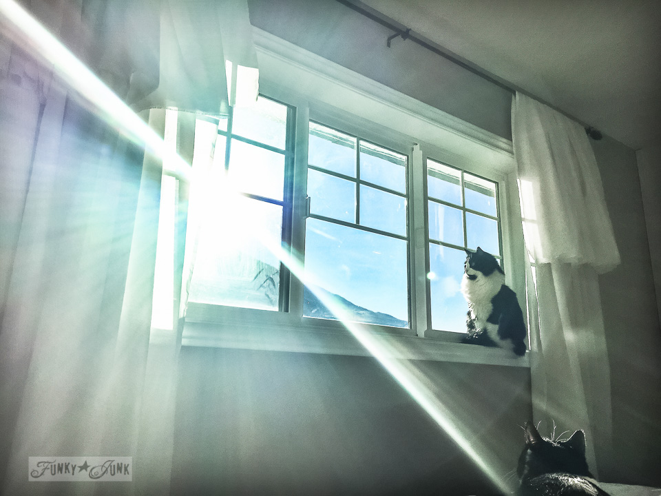 Cat on a windowsill with sun streaming in / part of Just call me the night rider - on working out. Or lack thereof... / funkyjunkinteriors.net