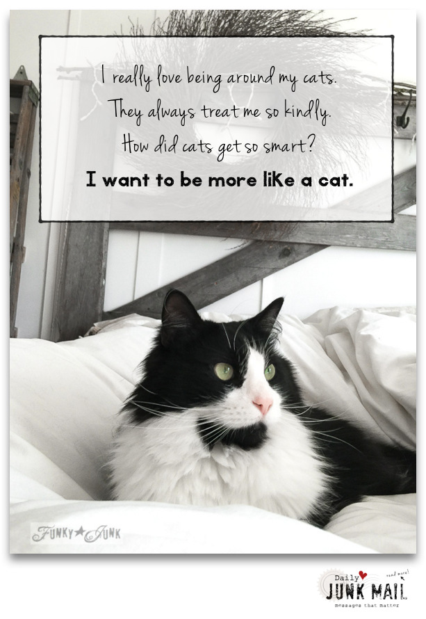 I want to be more like a cat / inspiring rambling on kindness through the series, Daily Junk Mail on funkyjunkinteriors.net