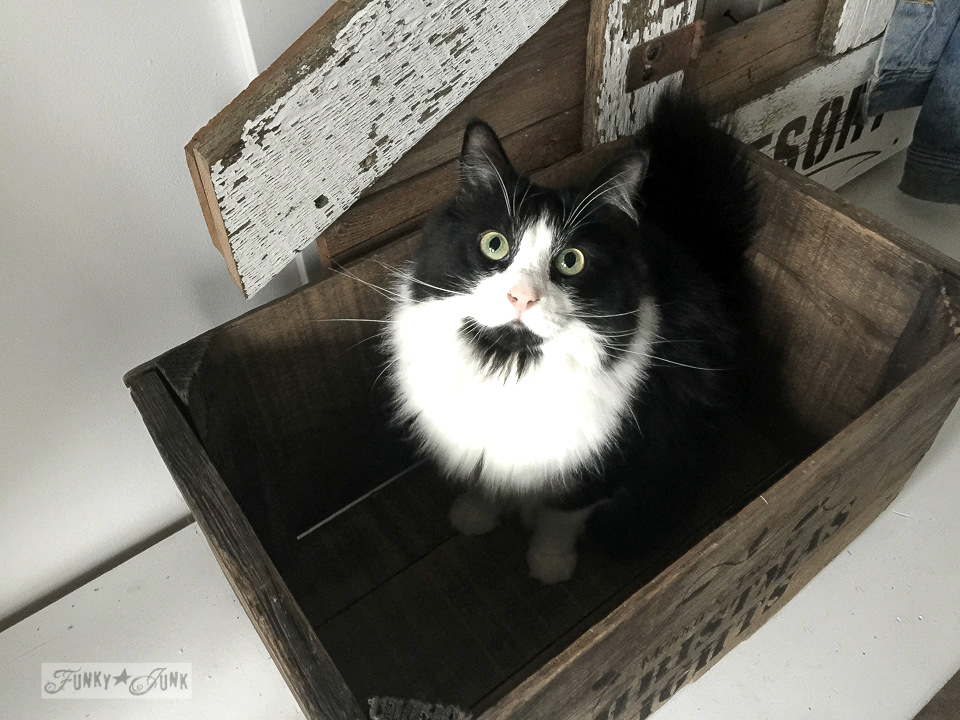 cat in a crate / funkyjunkinteriors.net