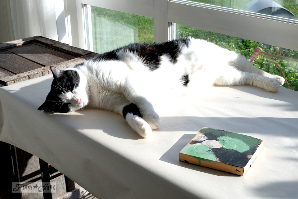 sleeping cat in the sun / funkyjunkinteriors.net