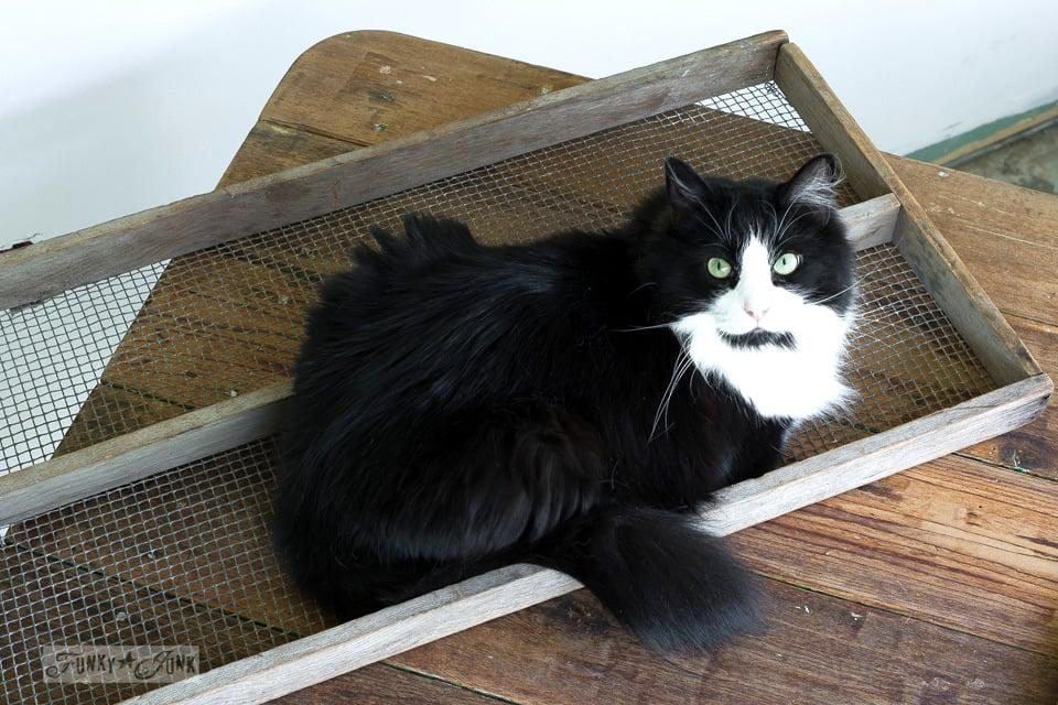 tuxedo cat sitting inside soil sifter / funkyjunkinteriors.net