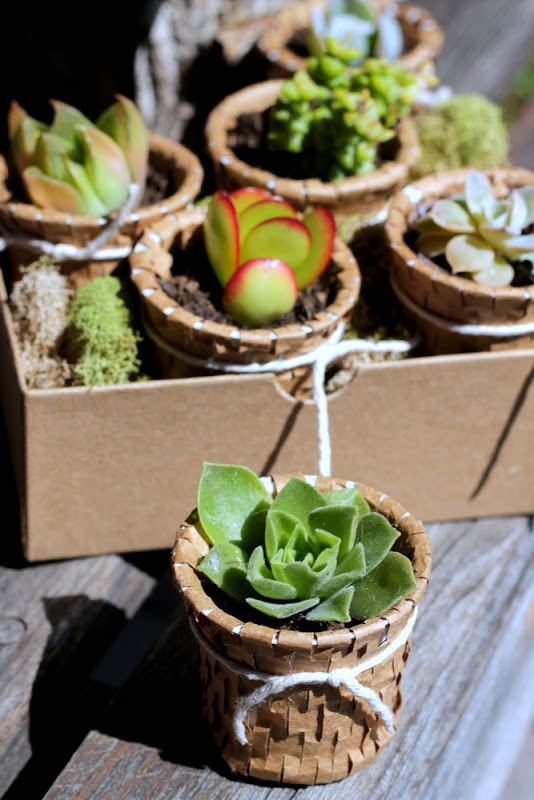 Recycled K Cup Succulent Pots, by Homework, featured on Funky Junk Interiors