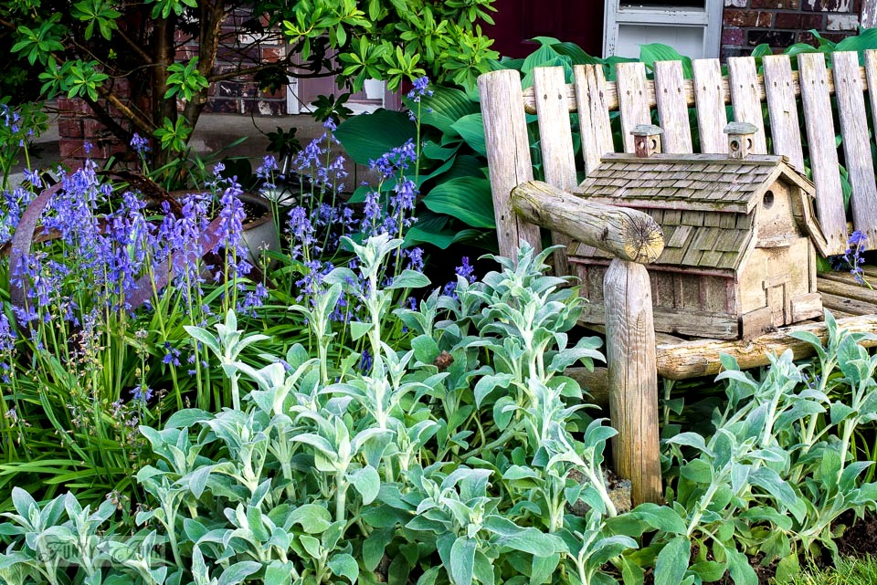 perennials and spring flowers in full out bloom in a rustic, natural garden / funkyjunkinteriors.net