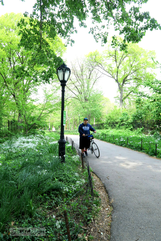 Walking a gorgeous path in Central Park, New York City / funkyjunkinteriors.net