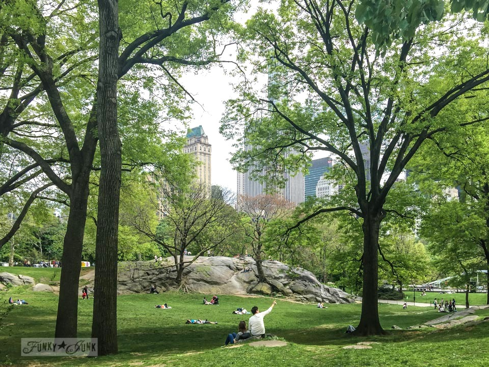 Scenic shot of trees against the tall city buildings from inside Central Park, New York City / funkyjunkinteriors.net