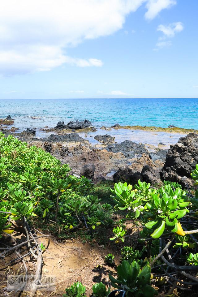 Kamaole Beach 2 along the lava and plant filled edges, in Kihei, Maui | funkyjunkinteriors.net
