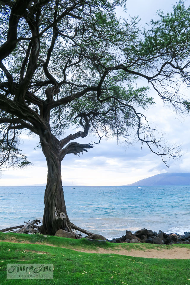 Park with large trees in front of Kamaole Beach 3 in Kihei, Maui | funkyjunkinteriors.net