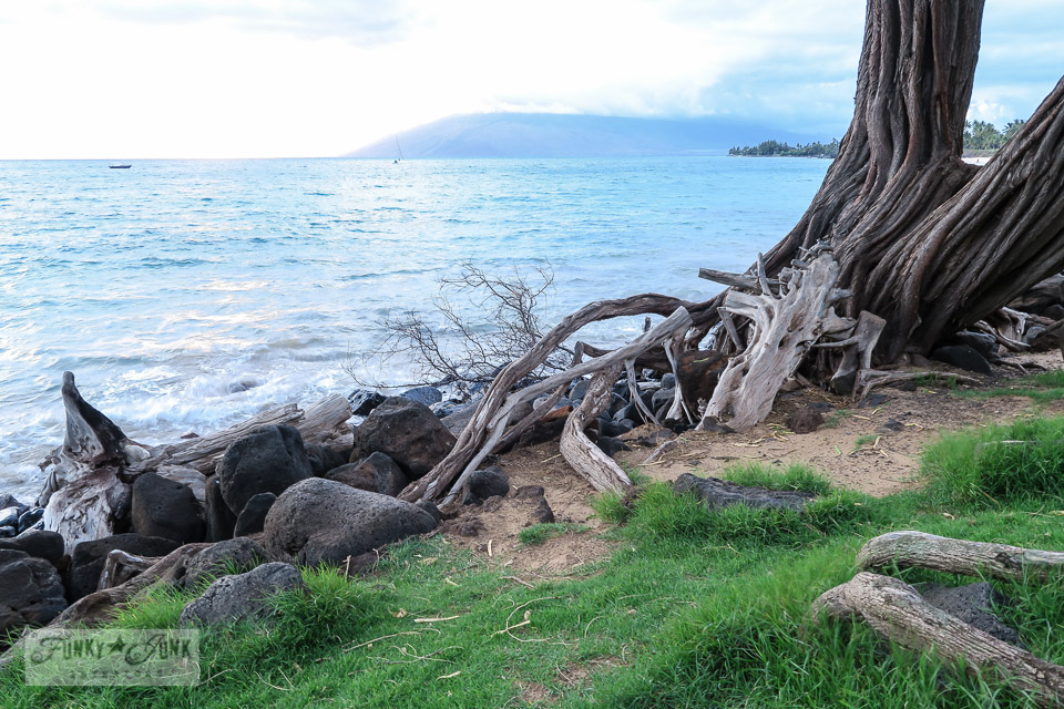 Park with large drift wood based trees in front of Kamaole Beach 3 in Kihei, Maui | funkyjunkinteriors.net