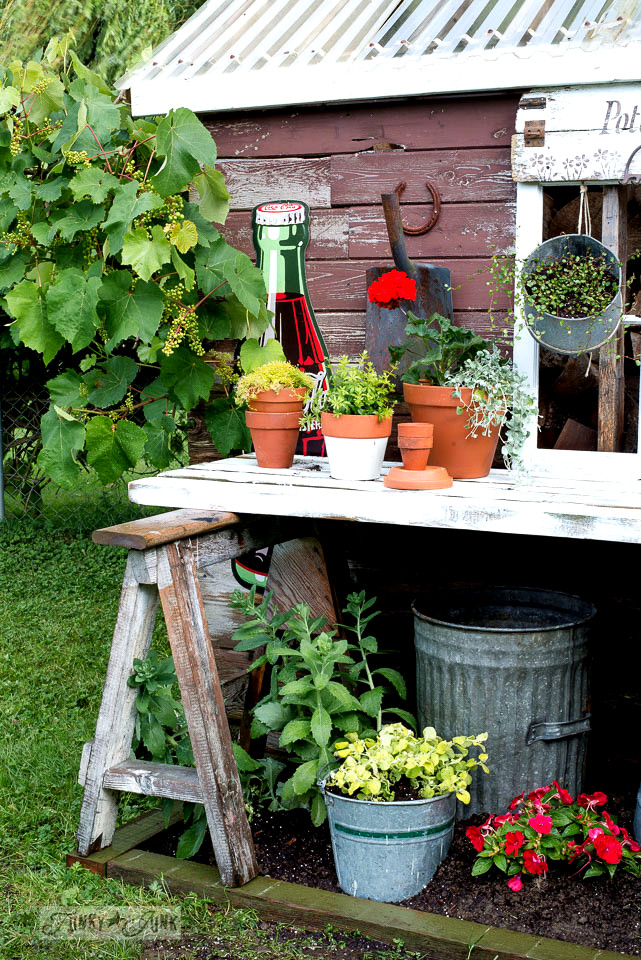 Sawhorse potting shed bench placed over a flowerbed, part of a rustic shed redo using Funky Junk's Old Sign Stencils & Fusion Mineral Paint |funkyjunkinteriors.net