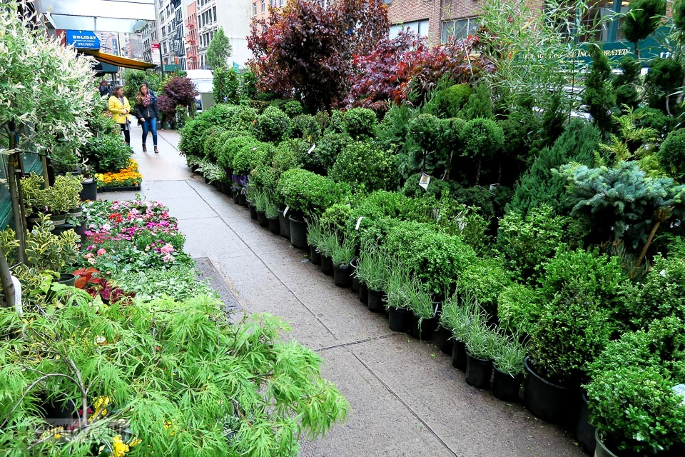 plants lining the sidewalks - The streets of the flower district in New York City / funkyjunkinteriors.net