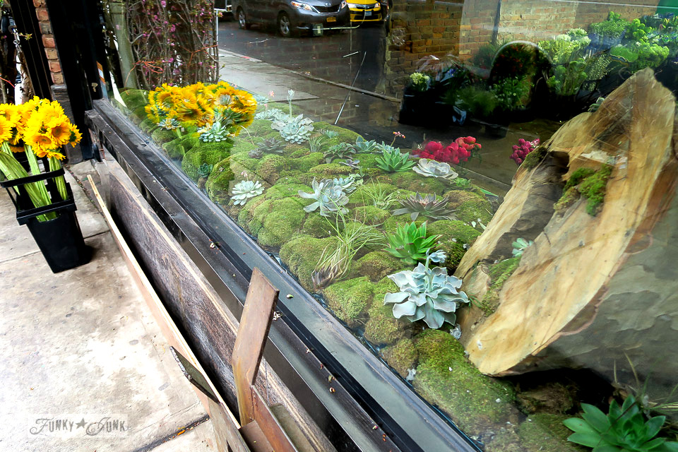 Gorgeous moss display in a storefront window in the Flower District, in Chelsea, New York City / funkyjunkinteriors.net