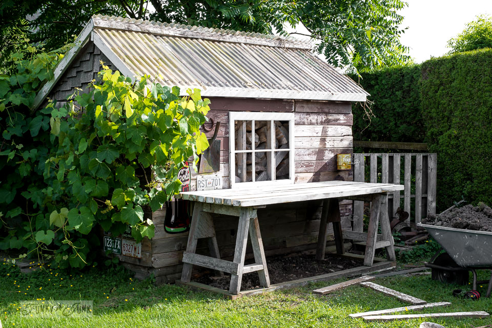 easy to make sawhorse potting bench in front of a rustic shed | funkyjunkinteriors.net