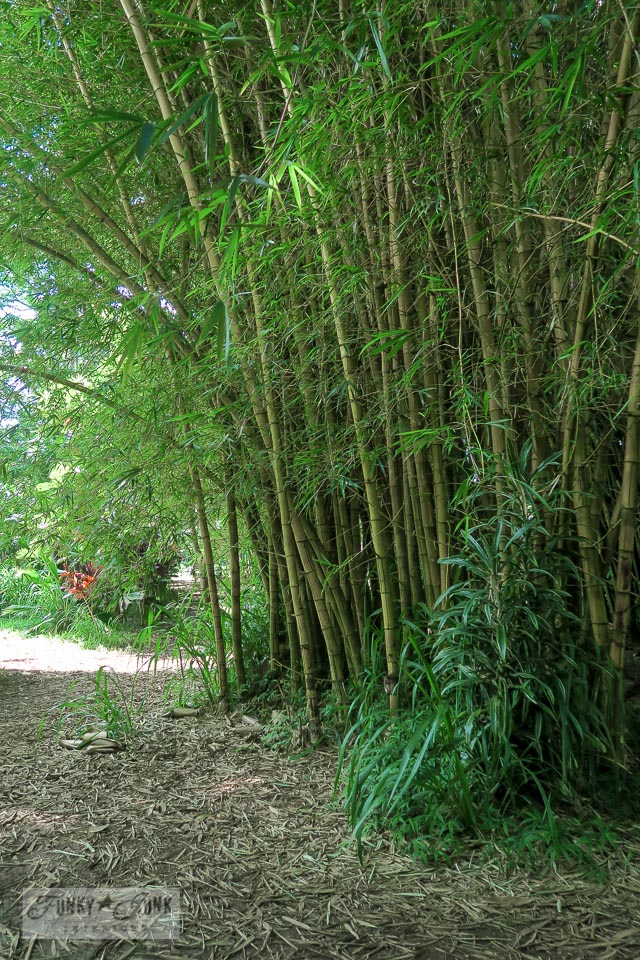 Bamboo forest at Twin Falls in Paia, Maui | funkyjunkinteriors.net